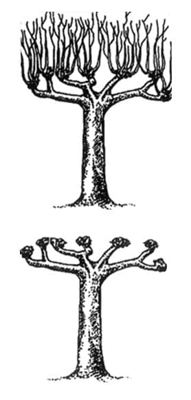 Tree Pollarding Maidstone Kent