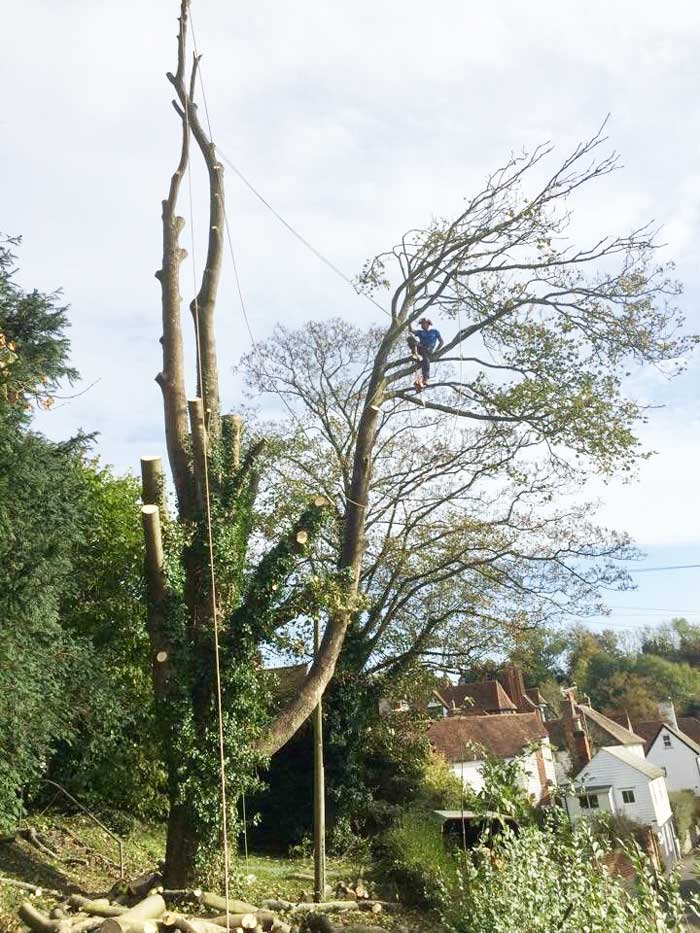 local tree surgeon near me