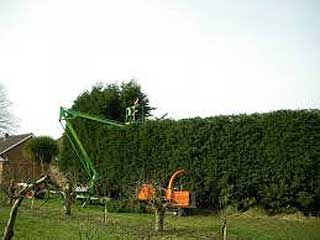 Hedge Cutting Service Maidstone Kent