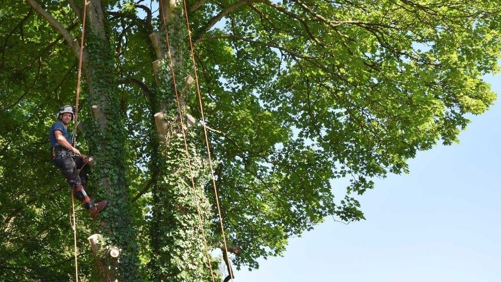 Tree Surgeon Kent