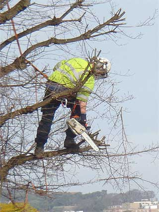 Tree work Maidstone