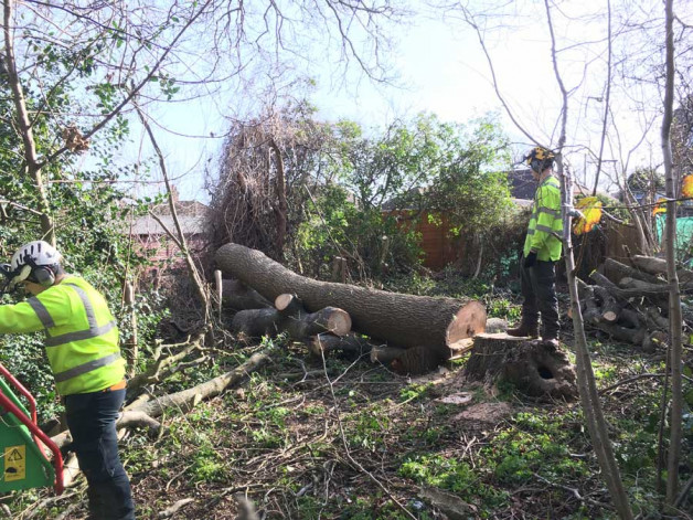 Dead ash tree removal in East Sussex